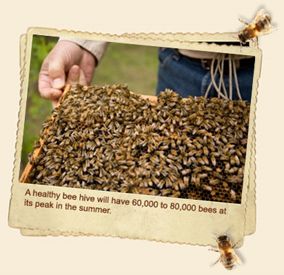 1_60000_Bees
