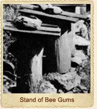 Stand of Bee Gums