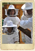 Sponsor a Bee Hive Today!