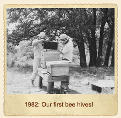 Our first bee hive